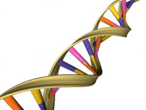 Fra https://upload.wikimedia.org/wikipedia/commons/9/97/DNA_Double_Helix.png